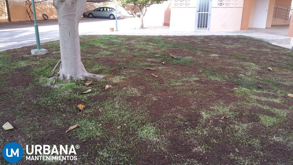 Empresa de jardiner a en alicante urbana mantenimientos for Empresas de jardineria