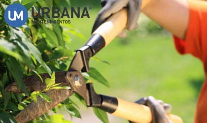 Gardening professionals in Alicante