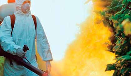 Empresa fumigaciones en Alicante