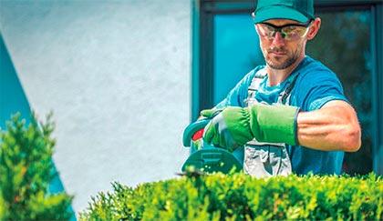 Profesionales de la jardinería